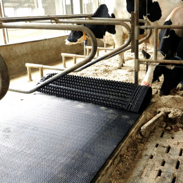KRAIBURG WELA LongLine rubber stall mat rolls in use
