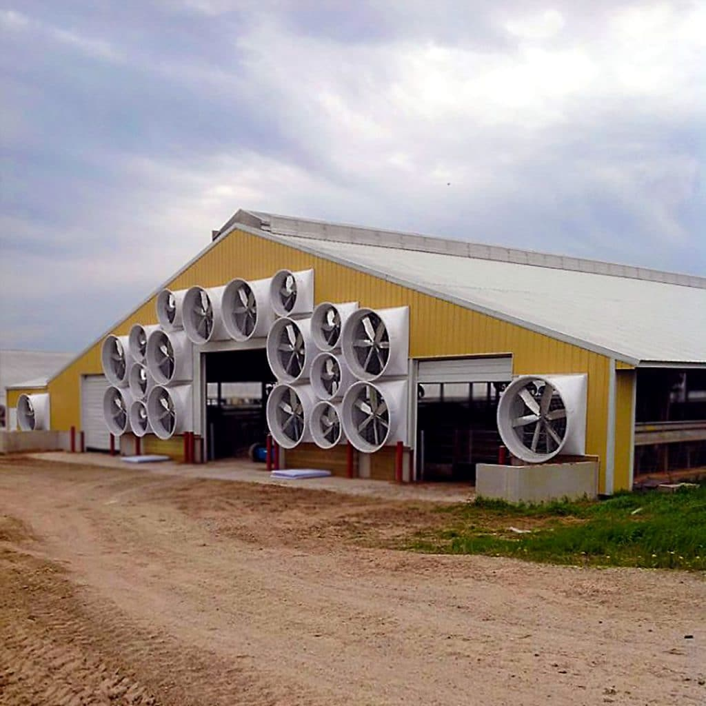 """55 and 72"""" Exhaust fans for tunnel ventilation on a dairy farm."""