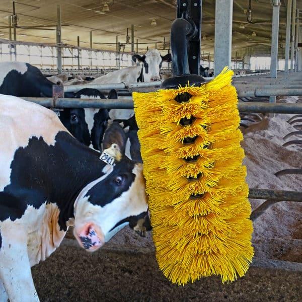 Cow using EasySwing Brush