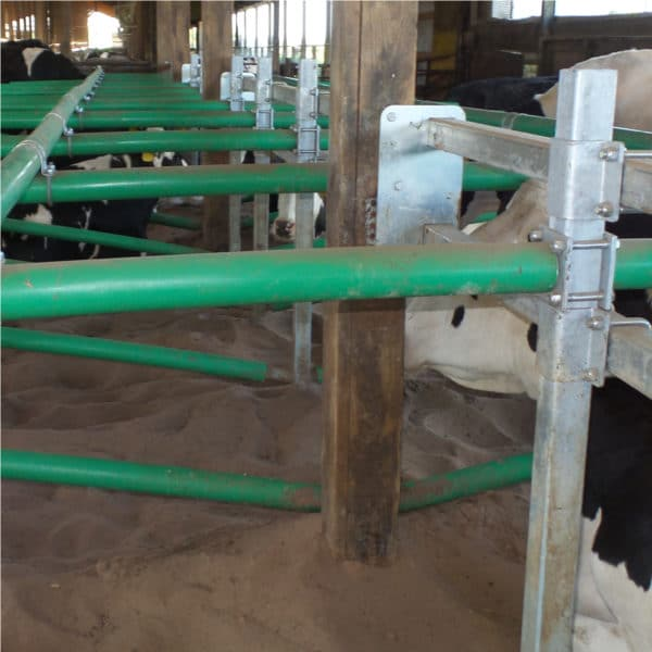 Agromatic Elevated Twin Beam Freestall System in barn.