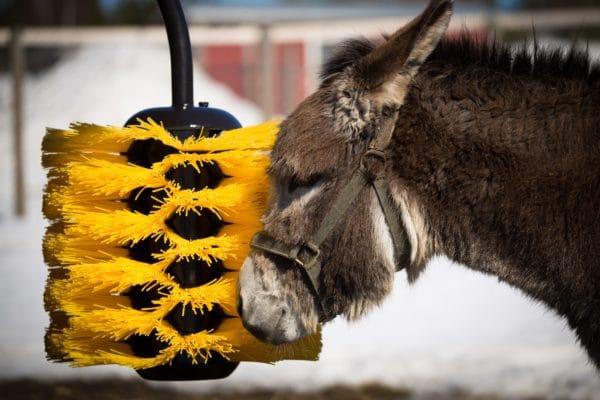 Donkey using Agromatic EasySwing Medium Brush