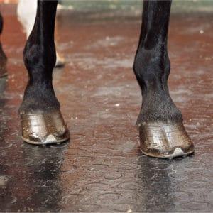 Horse standing on BLEMONDO horse mats