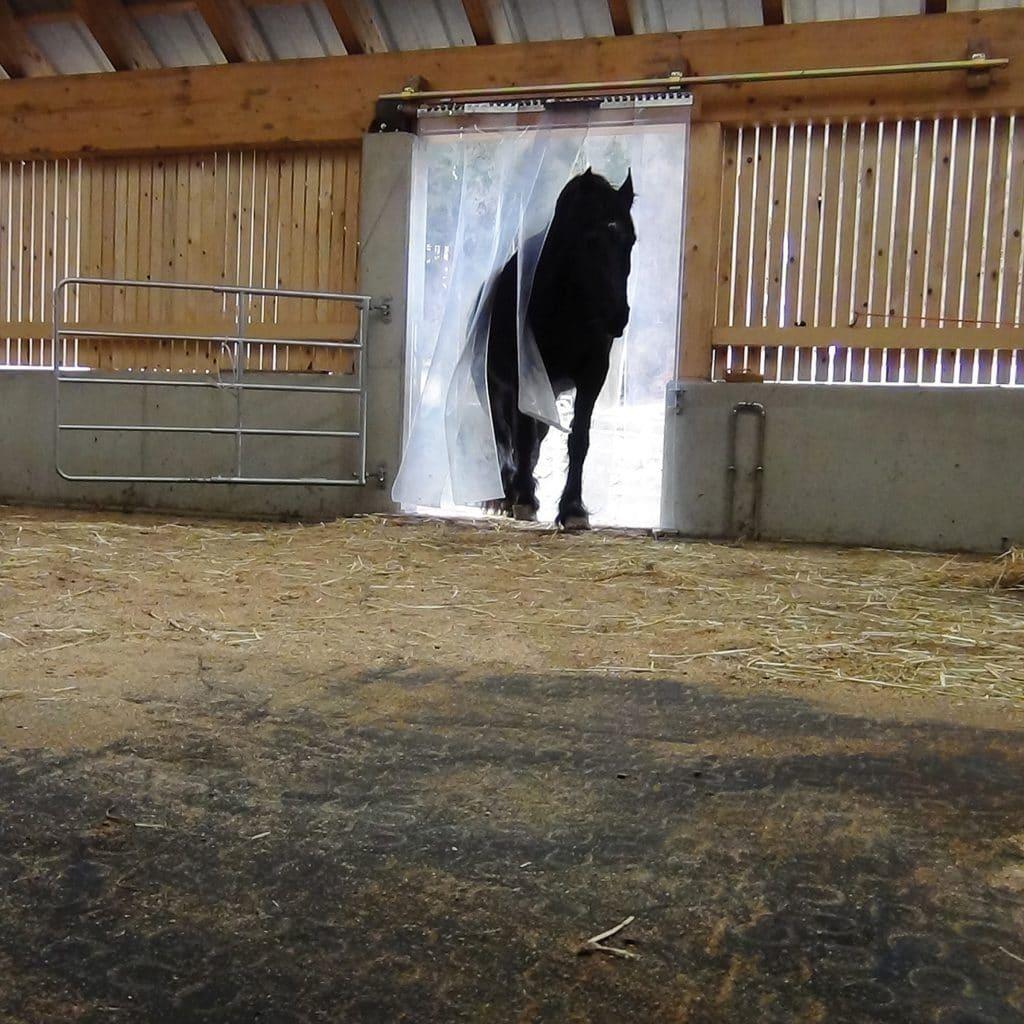BELMONDO Trend horse mat