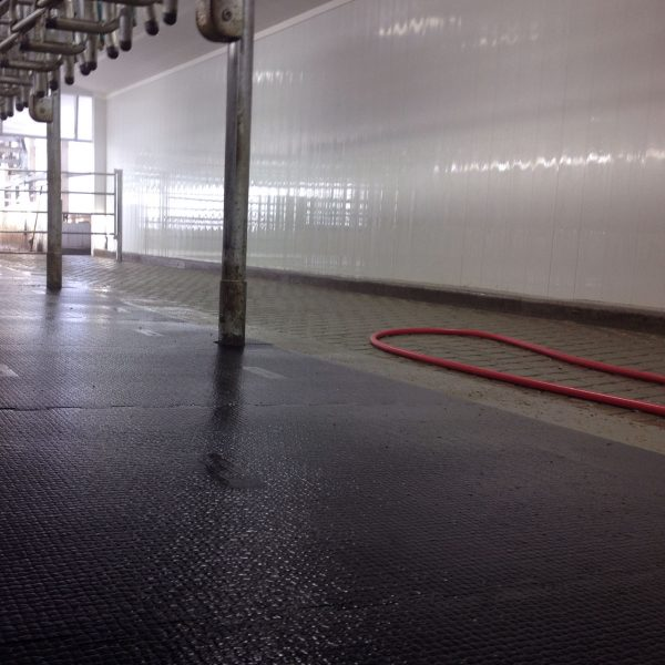 Agromatic wall panels in milking parlor