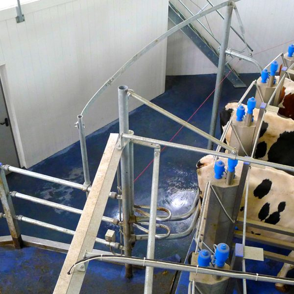 Agromatic concrete wall forms in rotary parlor